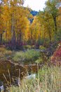 Rock Creek, Montana, Fall Colors. Royalty Free Stock Photo