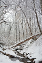 Rock Creek park at winter Stock Image