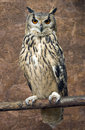 Rock Eagle Owl Royalty Free Stock Photo
