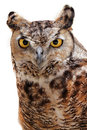 Rock eagle owl the indian also called the bengal or the indian or is a fairly large with Stock Images