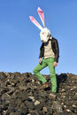 Rock easter rabbit in geometric mask the at spring time Royalty Free Stock Image