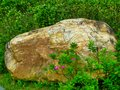 Rock and flowers Royalty Free Stock Photo
