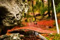 Rock in forest stanca closeup padure frunze rosii si verzi toamna bucuresti closeup red and green leaves the autumn Stock Image