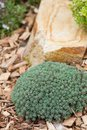 Rock garden Royalty Free Stock Photo