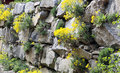 Rock garden or a garden wall of granite rocks and planted perennials that do not require lot of water and soil for growth Stock Photo