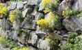 Rock garden or a garden wall Royalty Free Stock Photo