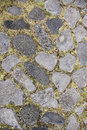 Rock and grass texture Royalty Free Stock Photo