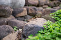 Rock and gravel in natural setting combination of various stones plants shallow dof Stock Photography