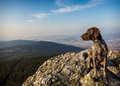 On a rock hound dog outdoor Royalty Free Stock Photography
