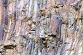 Rock layers pattern colored background Stock Photography