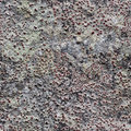 Rock with lichen seamless pattern for design northern covered Royalty Free Stock Image