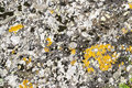 Rock with lichens flat surface of a upon which moss and have grown texture Stock Photo