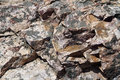 Rock is a mixture of solid minerals or mineral Royalty Free Stock Images