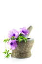 Rock mortar with purple flower plant isolated on white Royalty Free Stock Images