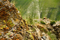 Rock mountains the of red stone at the altai region russia with moss lichen and plants covering it and as a background Stock Photography