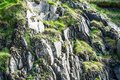 Rock mountains textures with a flowers Royalty Free Stock Photo