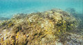 Rock on sea bottom closeup of covered in vegetation Royalty Free Stock Photos