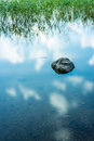Rock in the still water soft with reeds long shutter shot Royalty Free Stock Photo