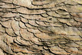Rock surface Stock Image