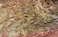 Rock surface the local features of texture Royalty Free Stock Images