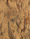 Rock texture color surface with Royalty Free Stock Image