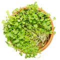 Rocket salad sprouts, arugula, in wooden bowl over white Royalty Free Stock Photo