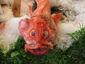 Rockfish Royalty Free Stock Photo