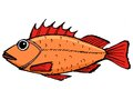 Rockfish hand drawn cartoon sketch illustration of Royalty Free Stock Image