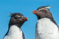 Rockhopper penguins over blue sky Royalty Free Stock Photography