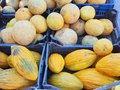 Rockmelon varieties rock melons two different for sale at weekly greek street market greece Royalty Free Stock Photography