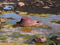 Rockpool Junk Royalty Free Stock Photo