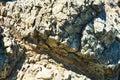 Stones, hard rocks, landscape. Stone background Royalty Free Stock Photo