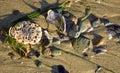 Rocks and broken sea shells on the beach in Laguna Beach, California. Royalty Free Stock Photo