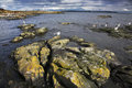 Rocks covered by a moss and sea birds Royalty Free Stock Photography