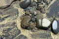 Rocks in Wet Sand Royalty Free Stock Photo
