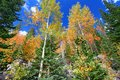 Rocky Mountain National Park Fall Colors Royalty Free Stock Photo