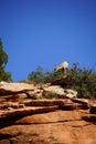 Rocky Mountain sheep and blue sky Royalty Free Stock Photo