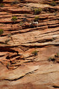 Rocky mountain sheep ovis canadensis climbing on red sandstone cliffs in zion national park utah Stock Images