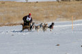 Rocky mountain sled dog championships competitor a musher shouts commands to his team while coming out of a turn on th january at Stock Image