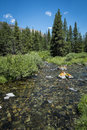 Rocky mountain stream clair Photos stock