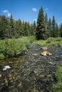 Rocky mountain stream clair Photos stock