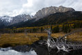 Rocky mountains near exshaw alberta canada reflecting in a lake of bleached wood Stock Image