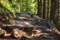 Rocky path in the High Tatras National Park,  Slovakia