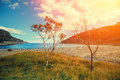 Rocky sea coast with trees Royalty Free Stock Photo