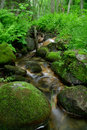 Rocky stream in forest Royalty Free Stock Photos