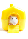 Rodent in the house on a white background Stock Images