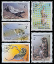 Rodents animals ussr circa a stamp printed in ussr shows from the series endangered wildlife circa Stock Photos