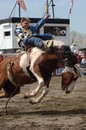 Rodeo: Bareback Riding Royalty Free Stock Image