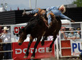 Rodeo: Bareback Riding Stock Photos