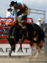 Rodeo: Bareback Riding Royalty Free Stock Photos